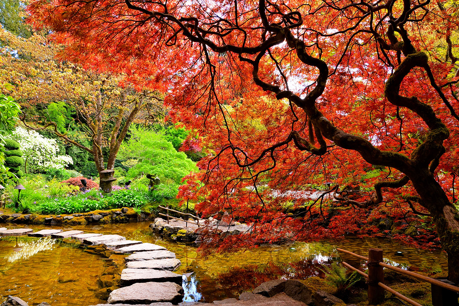 Stepping Stones Fall Leaves