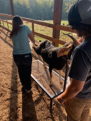 Animal Science takes care of the goats